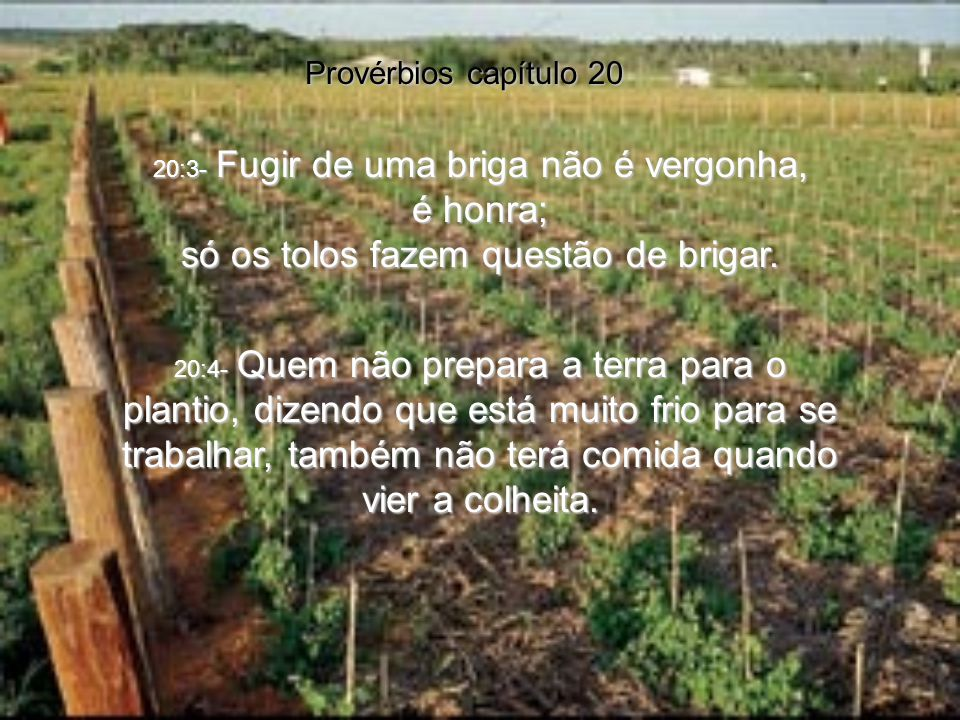 Provérbios capítulo 20 20:1- O vinho perturba o homem e dá uma falsa coragem. Como são loucos os homens que se entregam à bebida e acabam dominados po