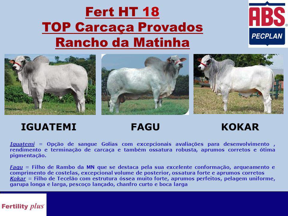 Fert HT 18 TOP Carcaça Provados Rancho da Matinha Iguatemi = Opção de sangue Golias com excepcionais avaliações para desenvolvimento, rendimento e terminação de carcaça e também ossatura robusta, aprumos corretos e ótima pigmentação.