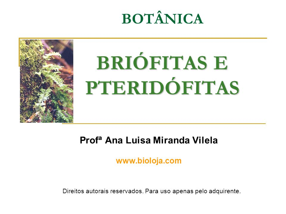www.bioloja.com BRIÓFITAS MUSGOSHEPÁTICASANTÓCEROS Briófitas
