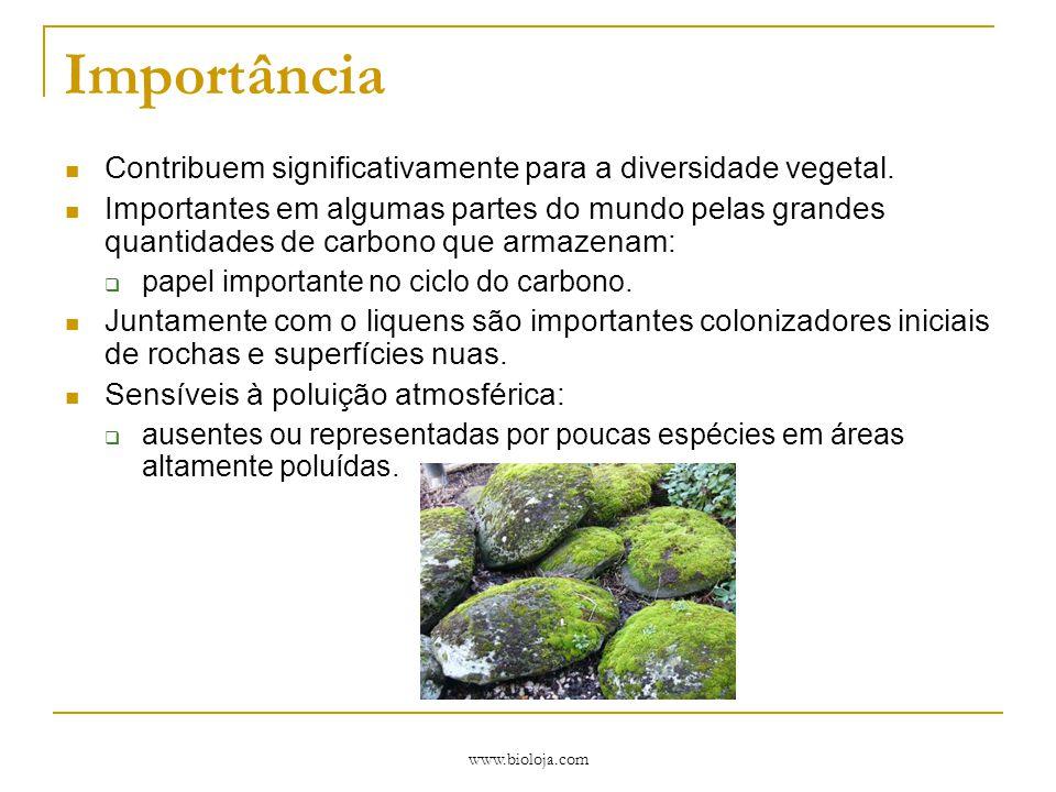 www.bioloja.com Importância Contribuem significativamente para a diversidade vegetal. Importantes em algumas partes do mundo pelas grandes quantidades