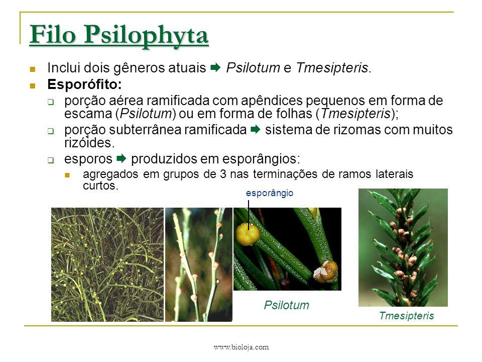 www.bioloja.com Filo Psilophyta Inclui dois gêneros atuais  Psilotum e Tmesipteris. Esporófito:  porção aérea ramificada com apêndices pequenos em f