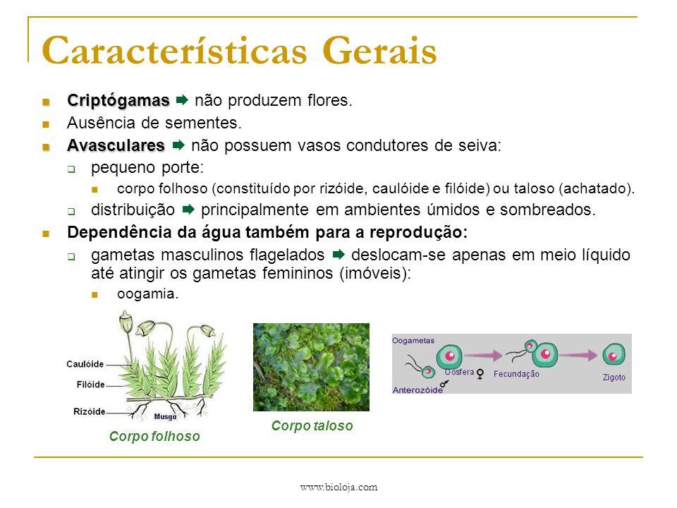 www.bioloja.com Características Gerais Criptógamas Criptógamas  não produzem flores. Ausência de sementes. Avasculares Avasculares  não possuem vaso