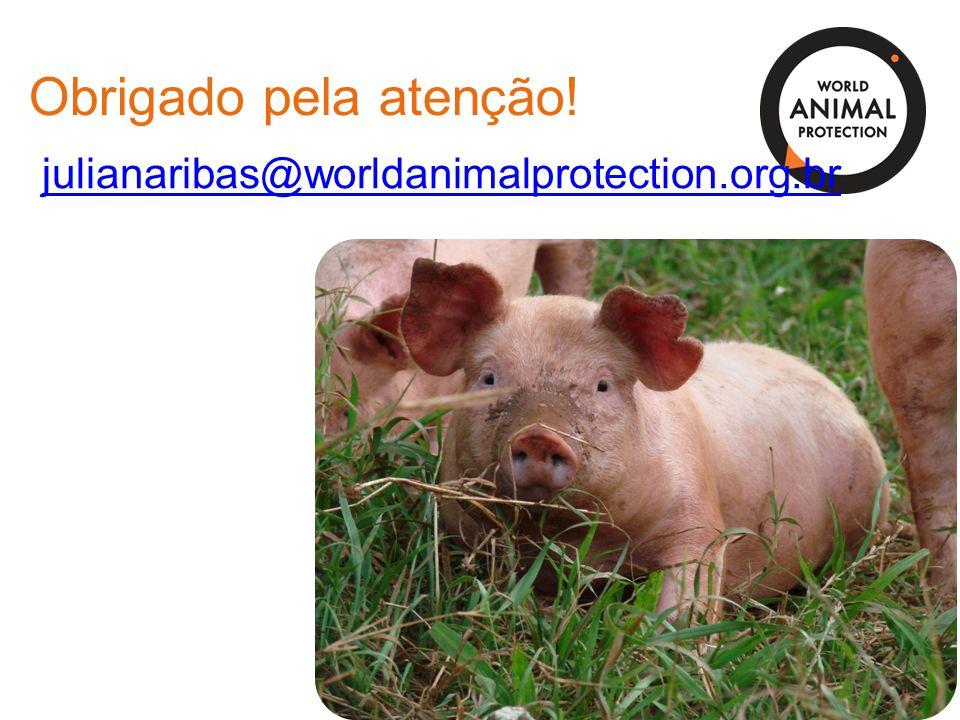 Obrigado pela atenção! julianaribas@worldanimalprotection.org.br