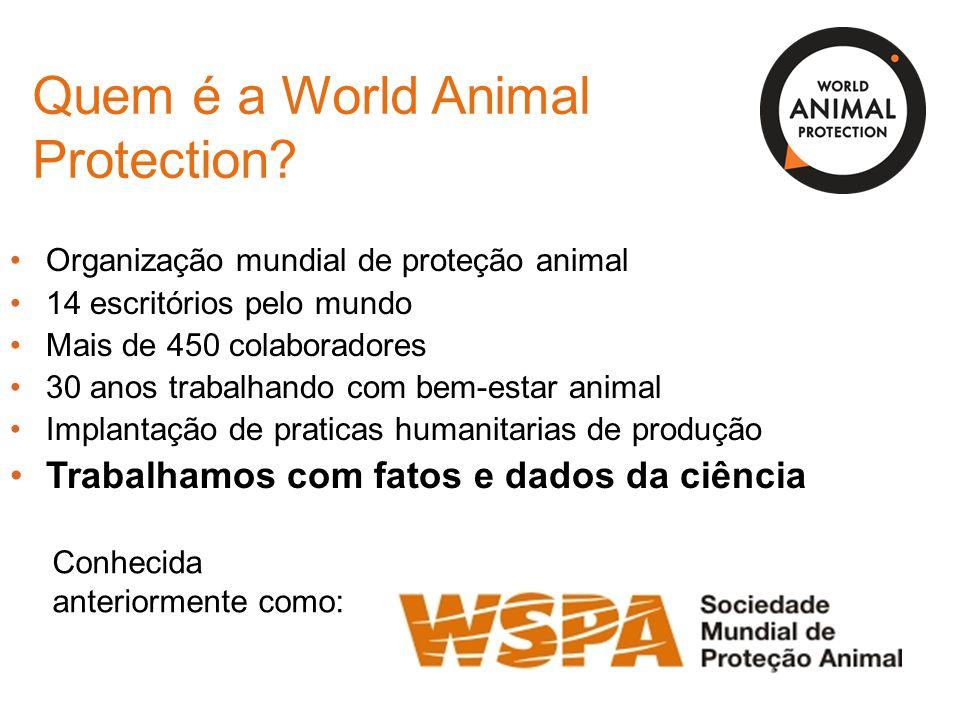 Quem é a World Animal Protection? Organização mundial de proteção animal 14 escritórios pelo mundo Mais de 450 colaboradores 30 anos trabalhando com b