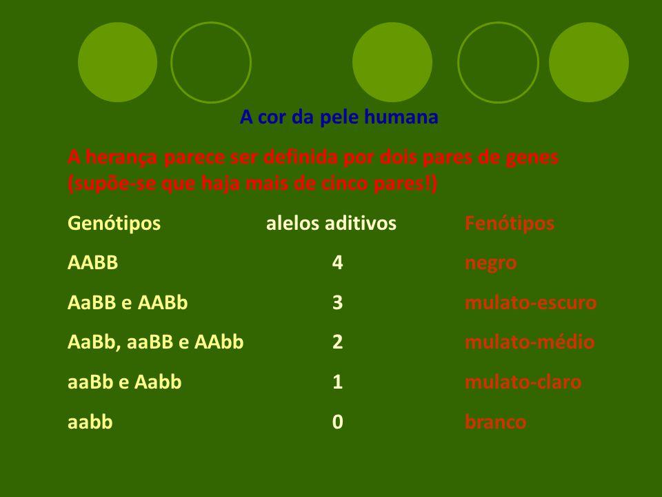 A cor da pele humana A herança parece ser definida por dois pares de genes (supõe-se que haja mais de cinco pares!) Genótiposalelos aditivosFenótipos AABB4negro AaBB e AABb3mulato-escuro AaBb, aaBB e AAbb2mulato-médio aaBb e Aabb1mulato-claro aabb0branco