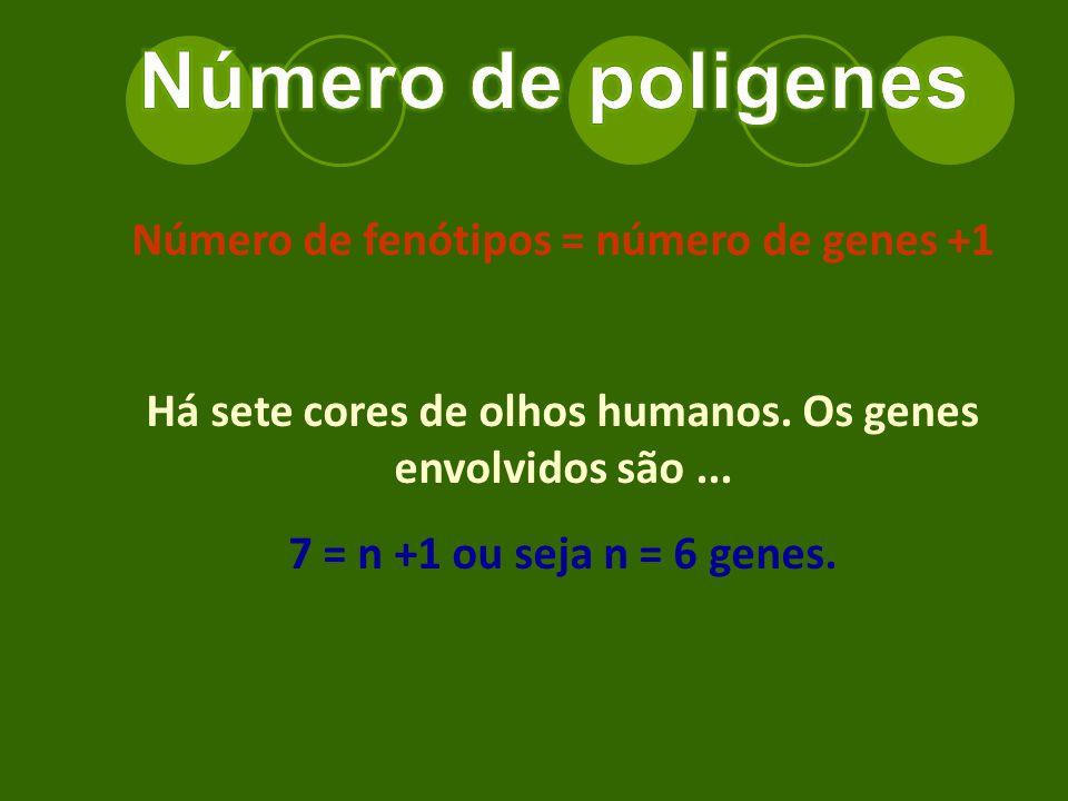 Número de fenótipos = número de genes +1 Há sete cores de olhos humanos.