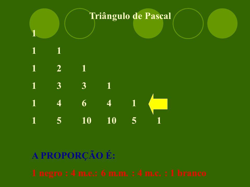 Triângulo de Pascal 11 121 1331 14641 15101051 A PROPORÇÃO É: 1 negro : 4 m.e.: 6 m.m.