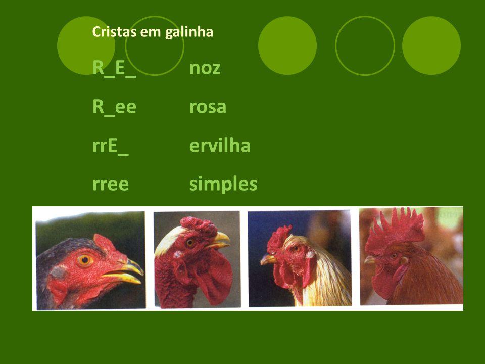 Cristas em galinha R_E_noz R_eerosa rrE_ervilha rreesimples