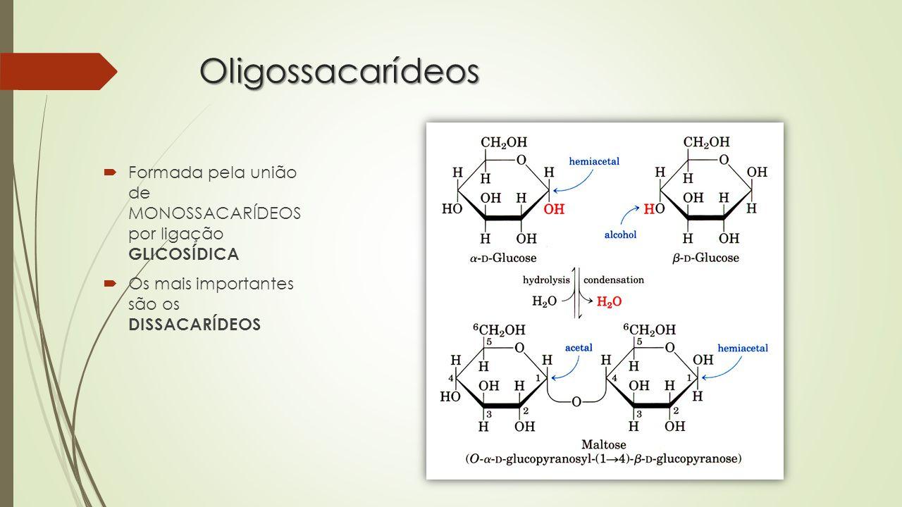 Oligossacarídeos  Formada pela união de MONOSSACARÍDEOS por ligação GLICOSÍDICA  Os mais importantes são os DISSACARÍDEOS