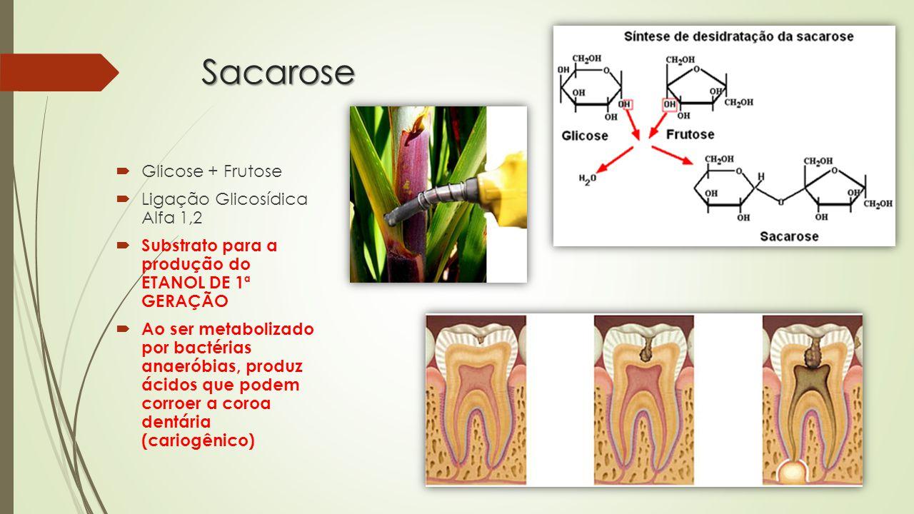 Sacarose  Glicose + Frutose  Ligação Glicosídica Alfa 1,2  Substrato para a produção do ETANOL DE 1ª GERAÇÃO  Ao ser metabolizado por bactérias anaeróbias, produz ácidos que podem corroer a coroa dentária (cariogênico)