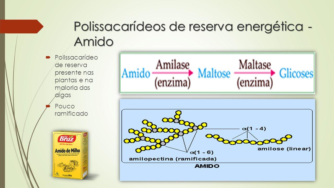 Polissacarídeos de reserva energética - Glicogênio  Polissacarídeo de reserva presente nos animais, fungos e protozoários  Muito ramificado  Diminui o espaço ocupado no espaço intracelular