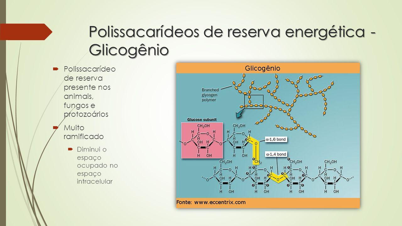 Relações entre Glicogênio e homeostase (manutenção da glicemia)  Glicogênese: Formação de glicogênio a partir da polimerização entre moléculas de glicose (INSULINA/Hiperglicemi a)  Glicogenólise: Hidrólise do glicogênio por meio da enzima glicogenase e consequente liberação de glicose no sangue (GLUCAGON/Hipoglice mia)