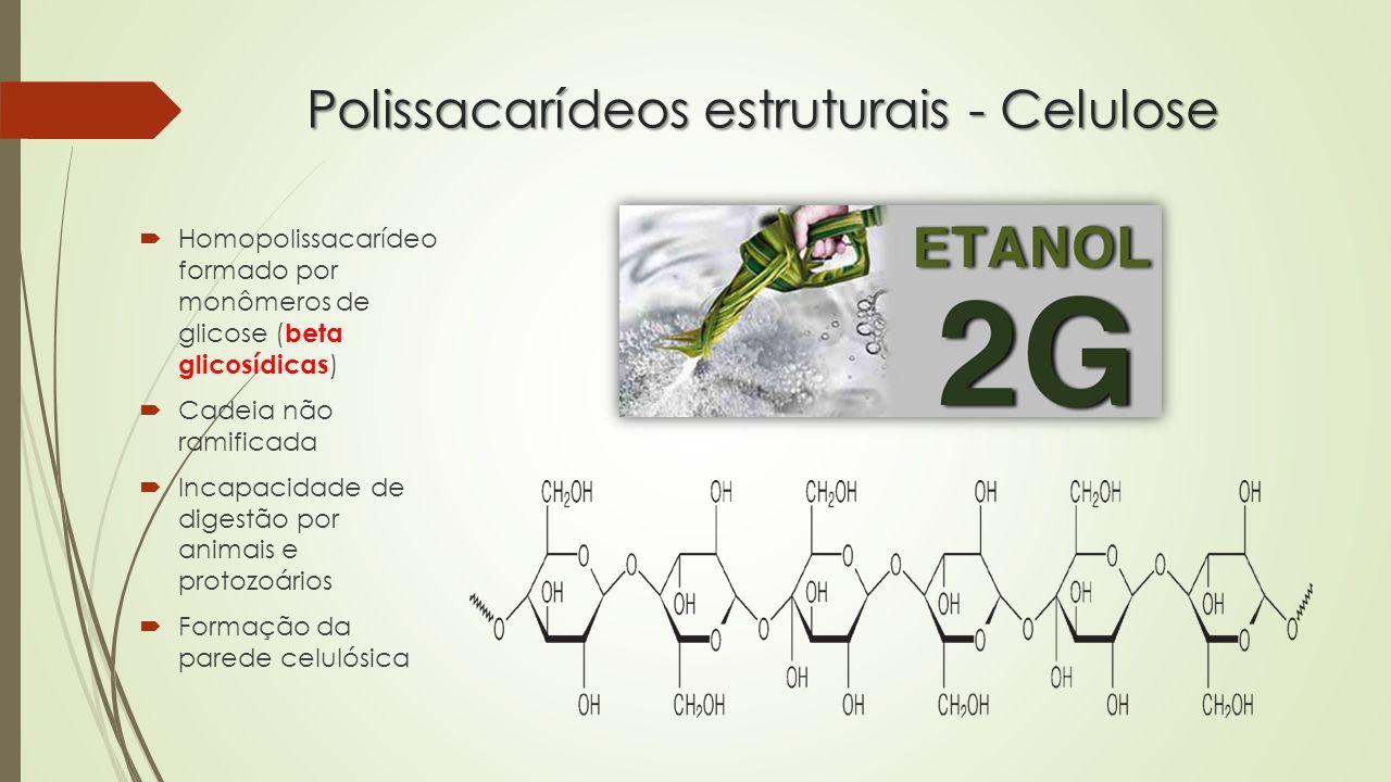 Polissacarídeos estruturais - Celulose  Homopolissacarídeo formado por monômeros de glicose ( beta glicosídicas )  Cadeia não ramificada  Incapacidade de digestão por animais e protozoários  Formação da parede celulósica