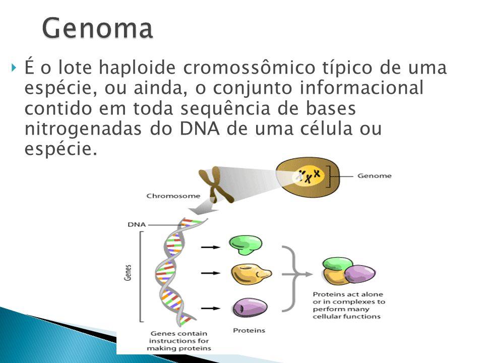  É o lote haploide cromossômico típico de uma espécie, ou ainda, o conjunto informacional contido em toda sequência de bases nitrogenadas do DNA de uma célula ou espécie.