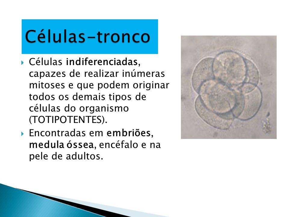  Células indiferenciadas, capazes de realizar inúmeras mitoses e que podem originar todos os demais tipos de células do organismo (TOTIPOTENTES).