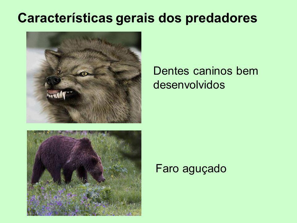 Dentes caninos bem desenvolvidos Faro aguçado Características gerais dos predadores