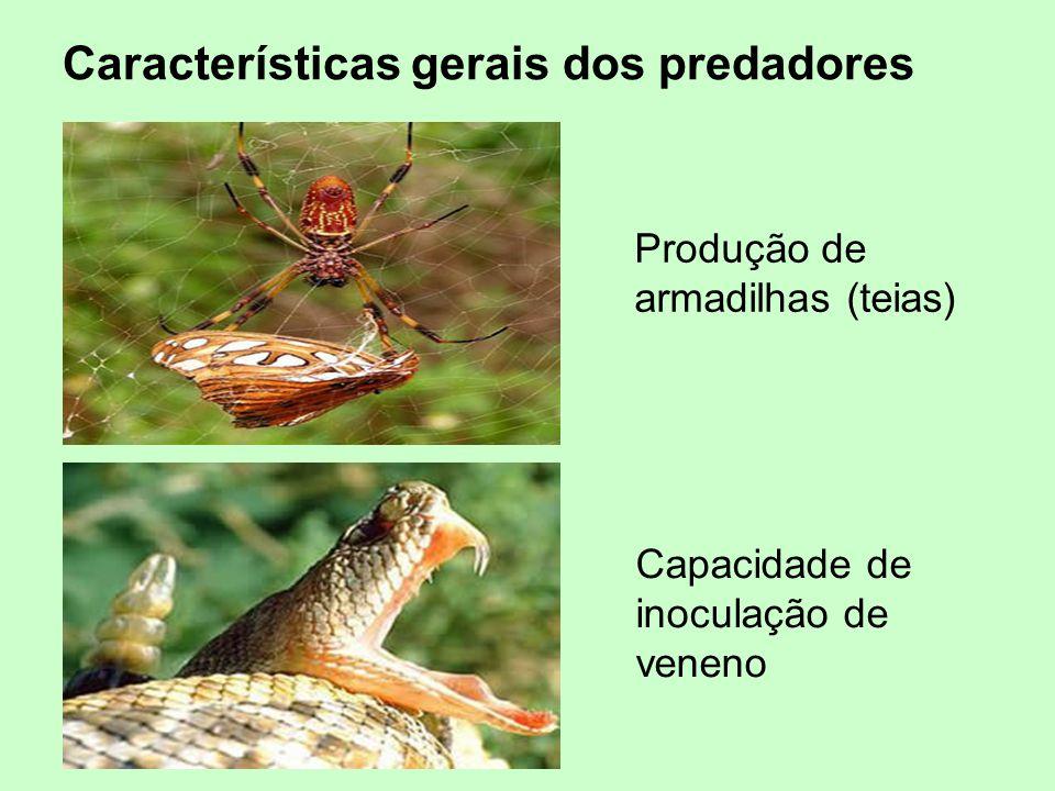 Produção de armadilhas (teias) Capacidade de inoculação de veneno Características gerais dos predadores