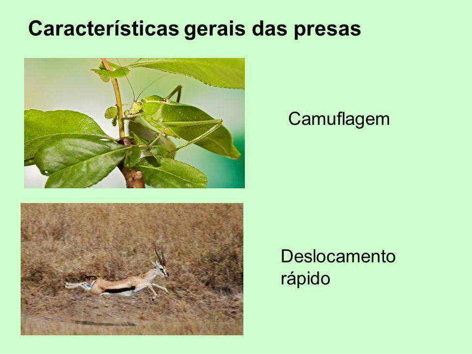 Camuflagem Deslocamento rápido Características gerais das presas