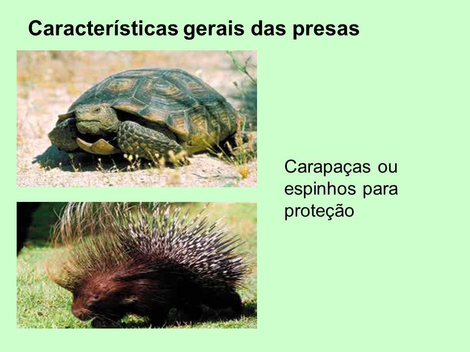 Carapaças ou espinhos para proteção Características gerais das presas