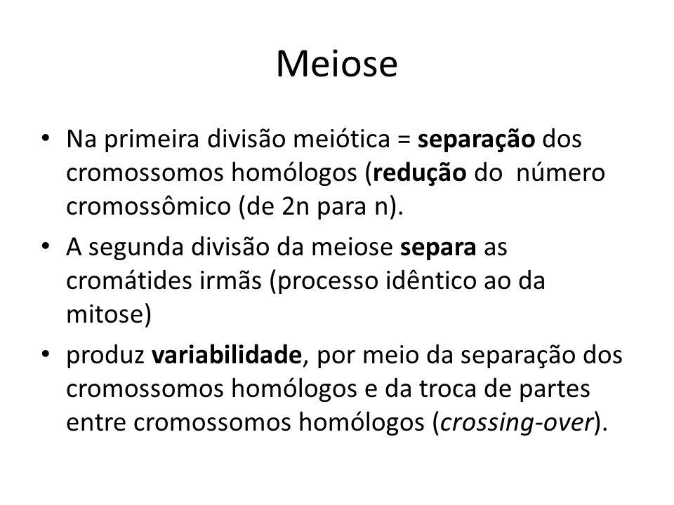 Meiose Na primeira divisão meiótica = separação dos cromossomos homólogos (redução do número cromossômico (de 2n para n). A segunda divisão da meiose