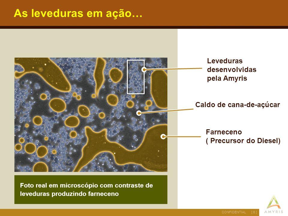 [ 6 ]CONFIDENTIAL As leveduras em ação… Farneceno ( Precursor do Diesel) Foto real em microscópio com contraste de leveduras produzindo farneceno Leve