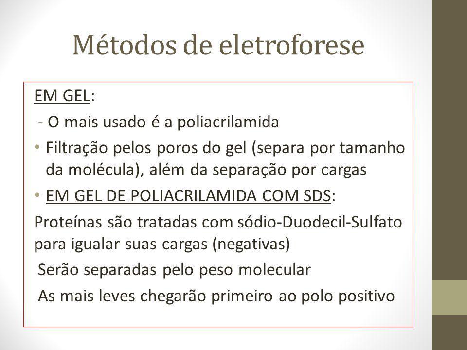 Métodos de eletroforese EM GEL: - O mais usado é a poliacrilamida Filtração pelos poros do gel (separa por tamanho da molécula), além da separação por