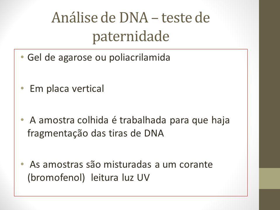 Análise de DNA – teste de paternidade Gel de agarose ou poliacrilamida Em placa vertical A amostra colhida é trabalhada para que haja fragmentação das