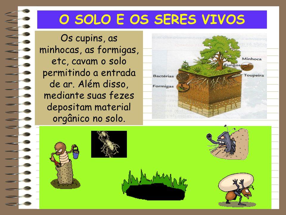 O SOLO E OS SERES VIVOS Os cupins, as minhocas, as formigas, etc, cavam o solo permitindo a entrada de ar. Além disso, mediante suas fezes depositam m