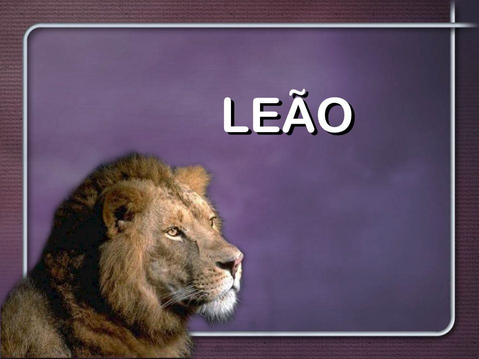 Leão LEÃO