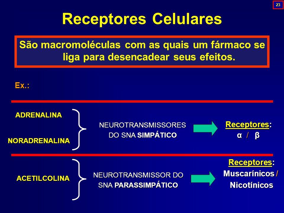 São macromoléculas com as quais um fármaco se liga para desencadear seus efeitos. Receptores Celulares ADRENALINANORADRENALINA NEUROTRANSMISSORES DO S
