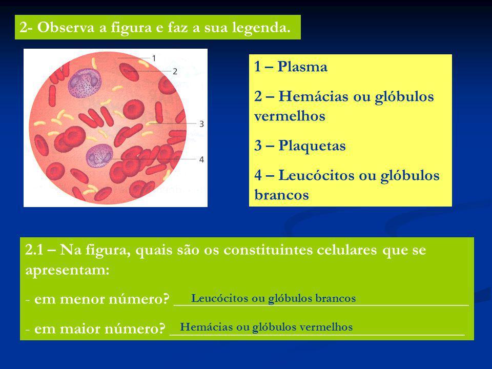 2- Observa a figura e faz a sua legenda. 1 – Plasma 2 – Hemácias ou glóbulos vermelhos 3 – Plaquetas 4 – Leucócitos ou glóbulos brancos 2.1 – Na figur