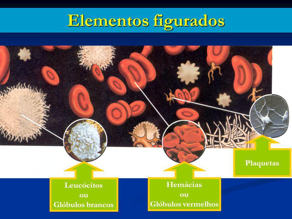 Elementos figurados Leucócitos ou Glóbulos brancos Hemácias ou Glóbulos vermelhos Plaquetas