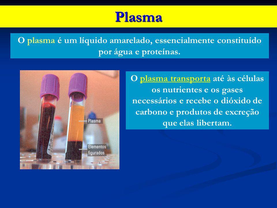 Plasma O plasma é um líquido amarelado, essencialmente constituído por água e proteínas. O plasma transporta até às células os nutrientes e os gases n