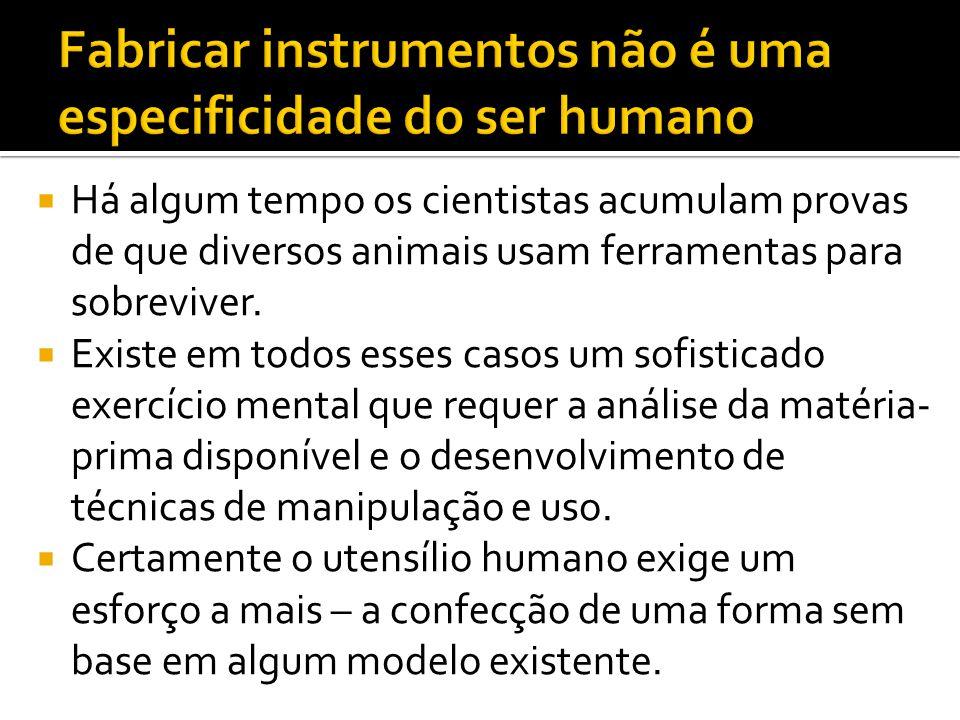  Assim chega-se a uma especificidade: só os seres humanos conseguem criar e usar instrumentos para fabricar outros instrumentos assim como a complexa relação interpessoal que estabelece regras sutis de uso dessas ferramentas.