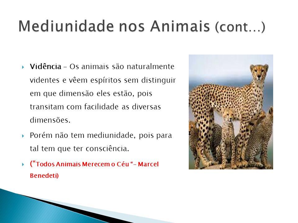  Vidência - Os animais são naturalmente videntes e vêem espíritos sem distinguir em que dimensão eles estão, pois transitam com facilidade as diversas dimensões.