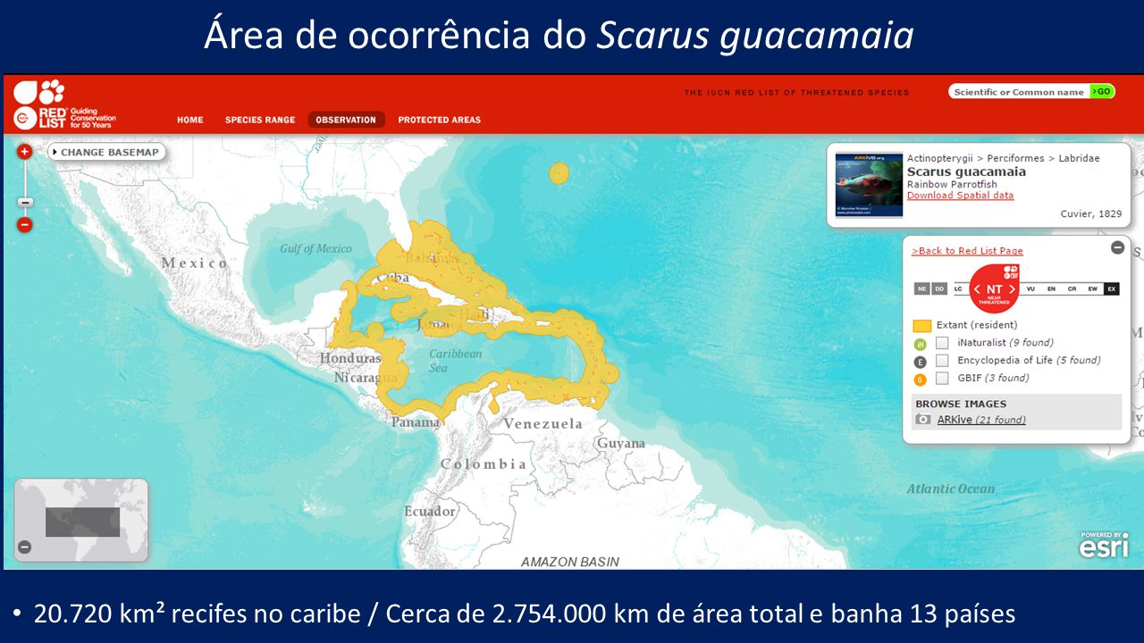 Área de ocorrência do Scarus guacamaia 20.720 km² recifes no caribe / Cerca de 2.754.000 km de área total e banha 13 países