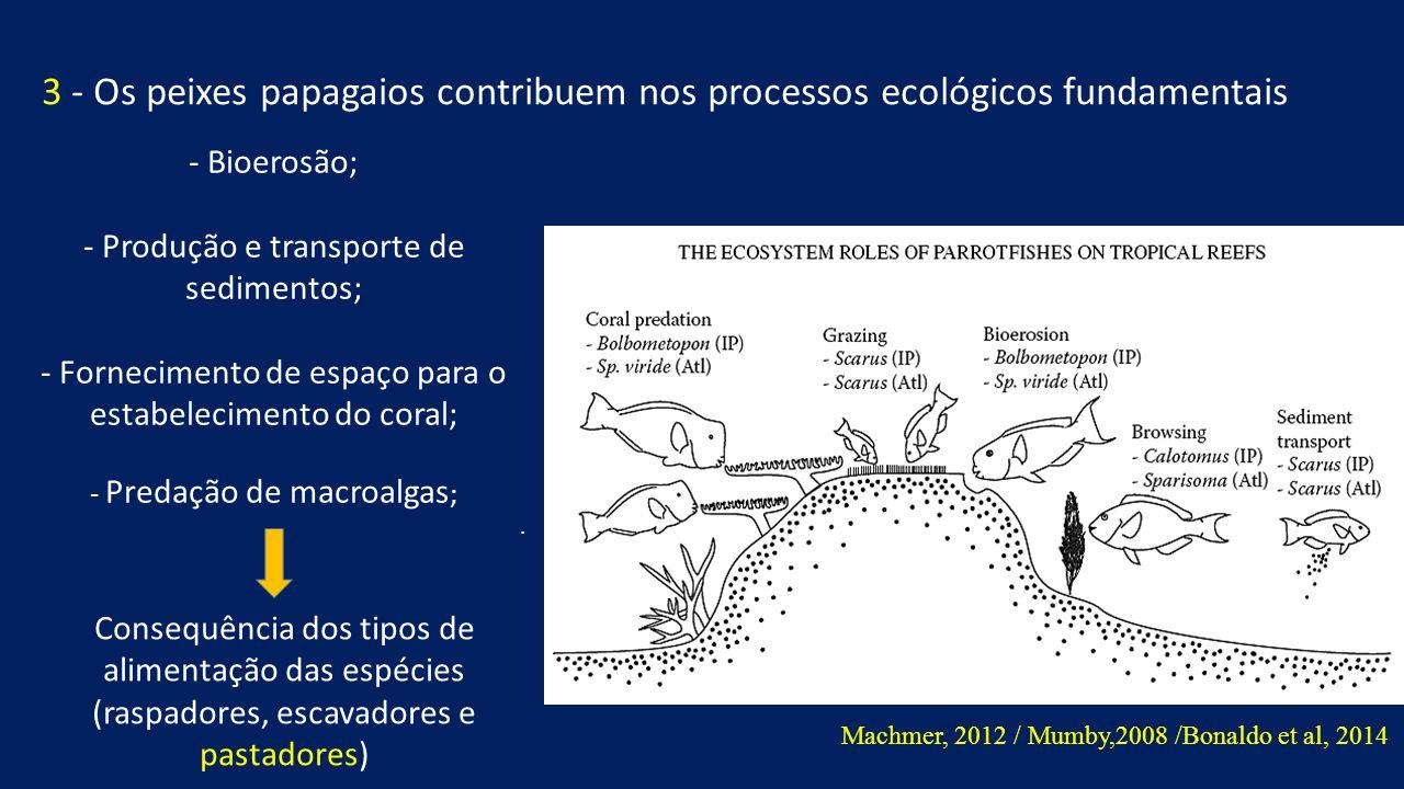 - Bioerosão; - Produção e transporte de sedimentos; - Fornecimento de espaço para o estabelecimento do coral; - Predação de macroalgas ;.