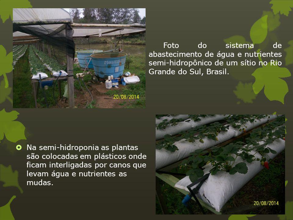 Foto do sistema de abastecimento de água e nutrientes semi-hidropônico de um sítio no Rio Grande do Sul, Brasil.  Na semi-hidroponia as plantas são c