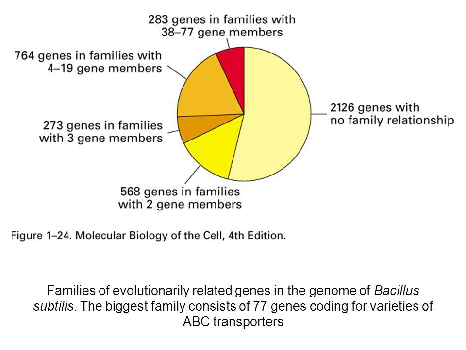 Families of evolutionarily related genes in the genome of Bacillus subtilis. The biggest family consists of 77 genes coding for varieties of ABC trans