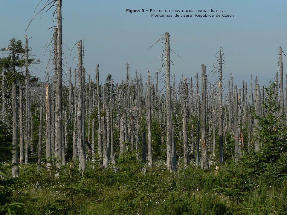 As chuvas ácidas podem retardar o crescimento das florestas vulneráveis eliminando os sais minerais do solo, comprometendo assim as plantações e a ren