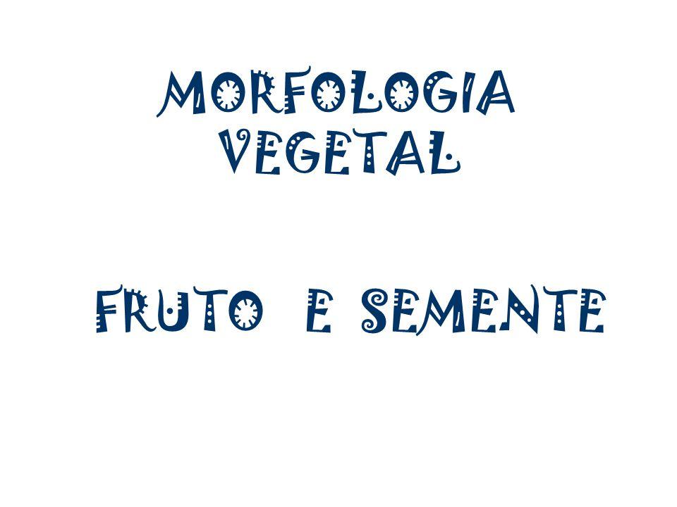 MORFOLOGIA VEGETAL FRUTO E SEMENTE