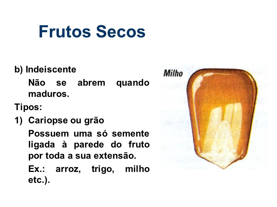 Frutos Secos b) Indeiscente Não se abrem quando maduros. Tipos: 1) Cariopse ou grão Possuem uma só semente ligada à parede do fruto por toda a sua ext