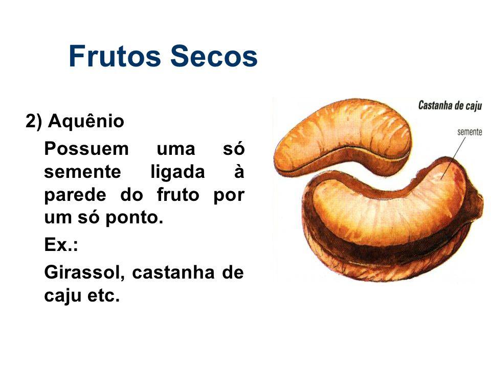 Frutos Secos 2) Aquênio Possuem uma só semente ligada à parede do fruto por um só ponto. Ex.: Girassol, castanha de caju etc.