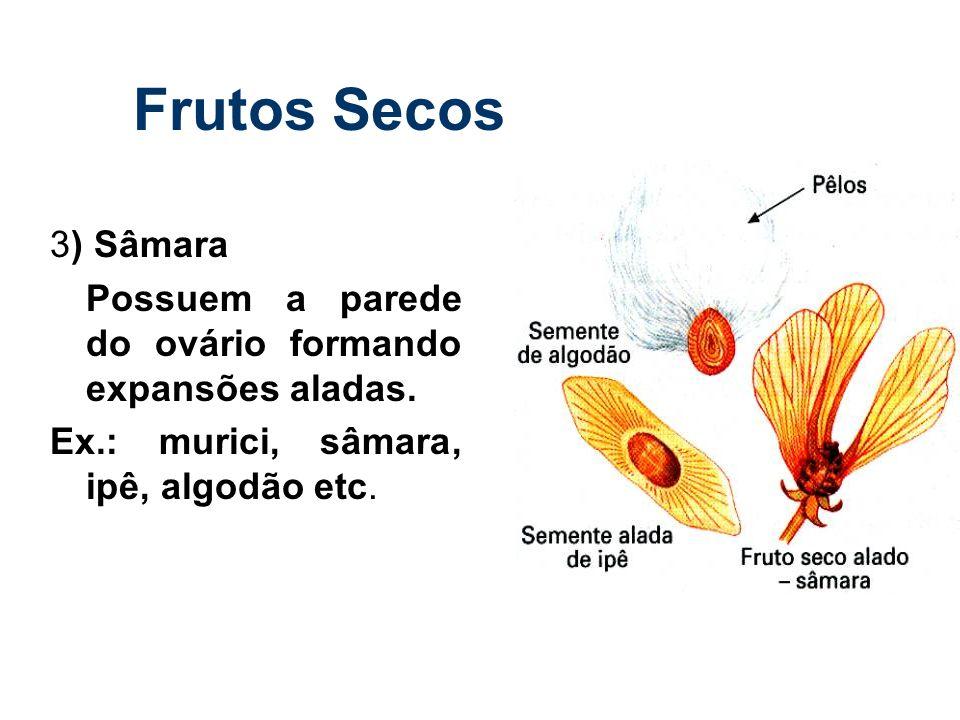 Frutos Secos 3) Sâmara Possuem a parede do ovário formando expansões aladas. Ex.: murici, sâmara, ipê, algodão etc.