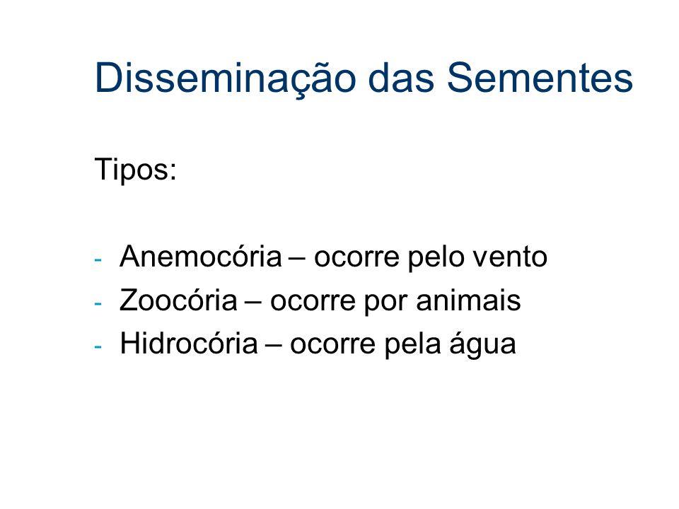 Disseminação das Sementes Tipos: - Anemocória – ocorre pelo vento - Zoocória – ocorre por animais - Hidrocória – ocorre pela água