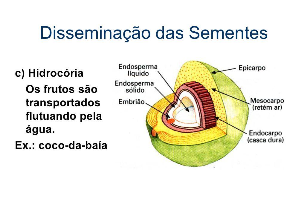 Disseminação das Sementes c) Hidrocória Os frutos são transportados flutuando pela água. Ex.: coco-da-baía