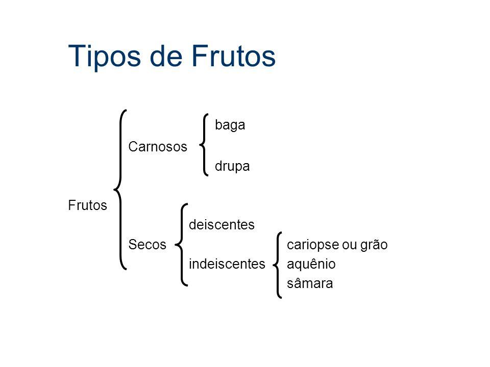 Tipos de Frutos baga Carnosos drupa Frutos deiscentes Secos cariopse ou grão indeiscentes aquênio sâmara