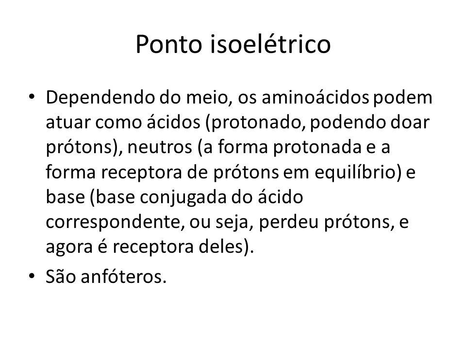 Ponto isoelétrico Dependendo do meio, os aminoácidos podem atuar como ácidos (protonado, podendo doar prótons), neutros (a forma protonada e a forma r