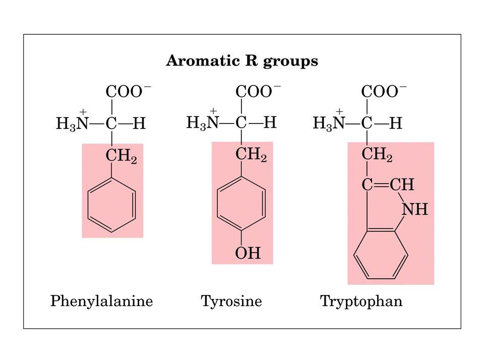 aas: classificações, qto ao radical Aminoácidos polares neutros: Apresentam radicais que tendem a formar ligação de hidrogênio, grupo tem cadeias laterais polares eletricamente neutras (sem cargas) em pH neutro.