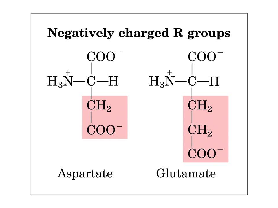 aas: classificações, qto ao radical Aminoácidos polares básicos Há três aminoácidos (a histidina, a Lisina e a Arginina) que possuem cadeias laterais básicas, e em todos e eles cadeia lateral é carregada positivamente em pH neutro ou perto dele.histidinaLisina ArgininapH